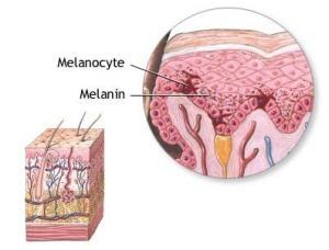 melanocito 2